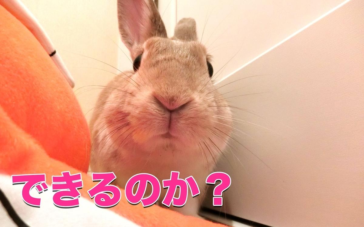f:id:himitsunohana:20201222174308j:plain