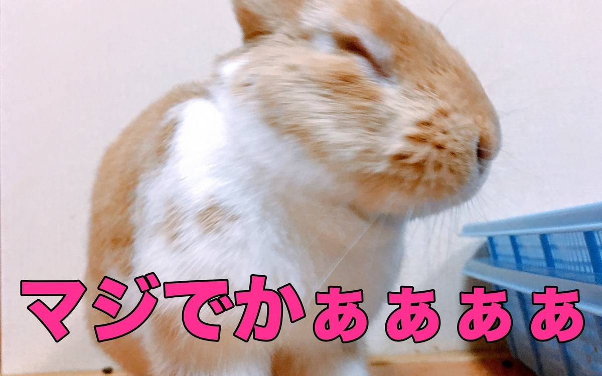 f:id:himitsunohana:20201229081041j:plain