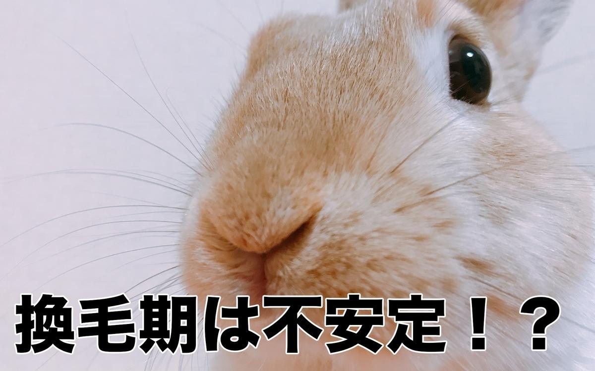 f:id:himitsunohana:20210119145403j:plain
