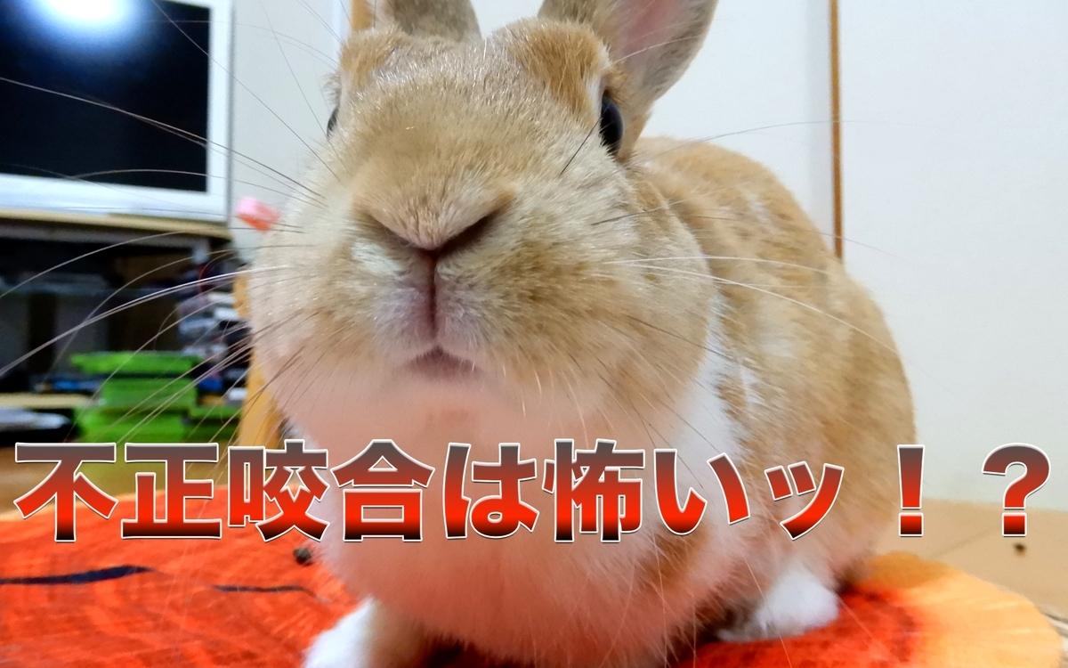 f:id:himitsunohana:20210202082606j:plain