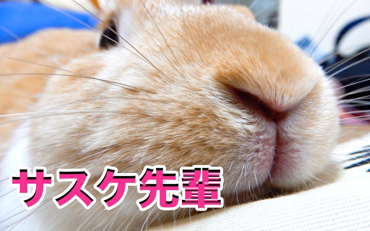 f:id:himitsunohana:20210220155702j:plain
