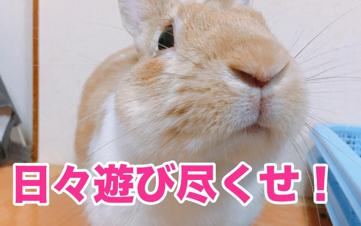 f:id:himitsunohana:20210220160226j:plain