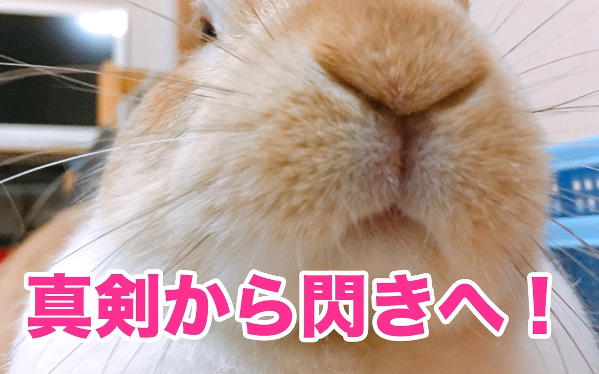 f:id:himitsunohana:20210220160710j:plain
