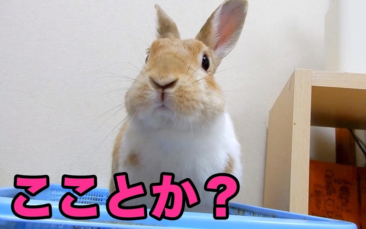 f:id:himitsunohana:20210223083943j:plain