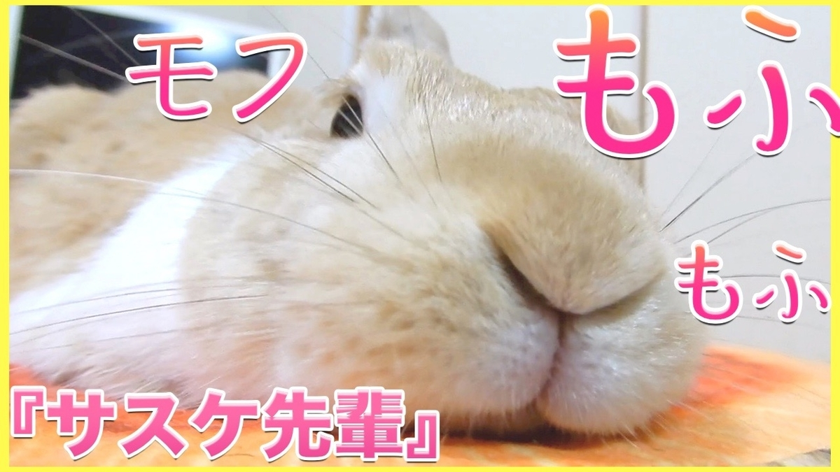f:id:himitsunohana:20210302143545j:plain