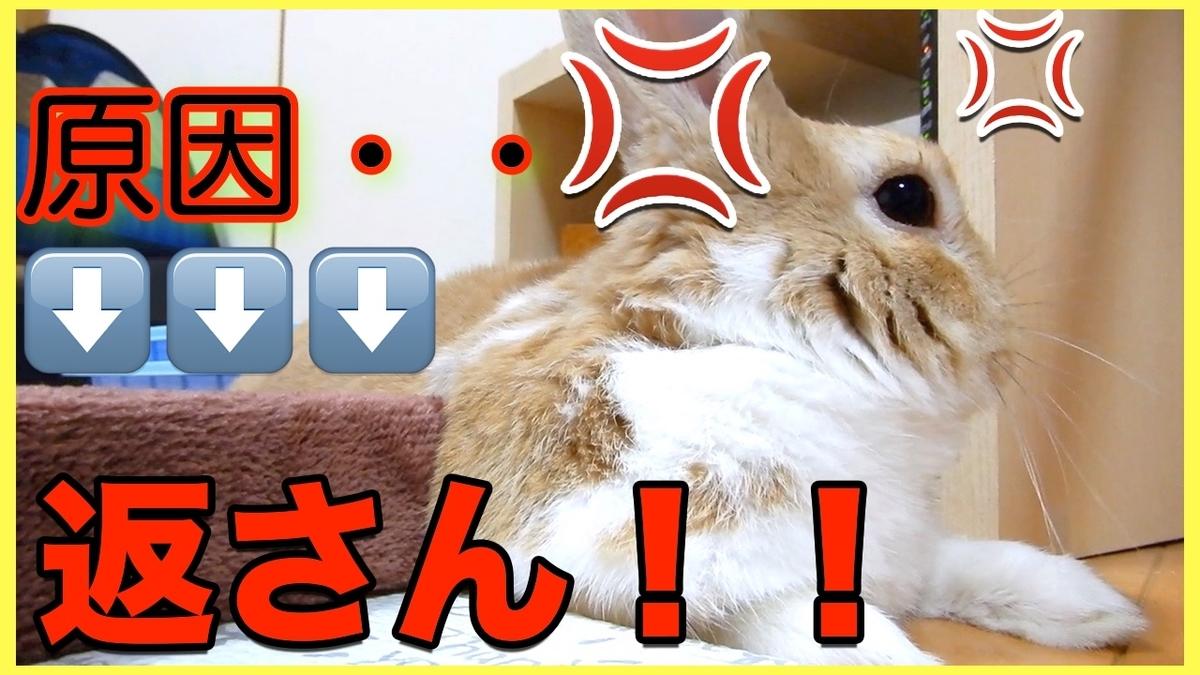 f:id:himitsunohana:20210615191225j:plain