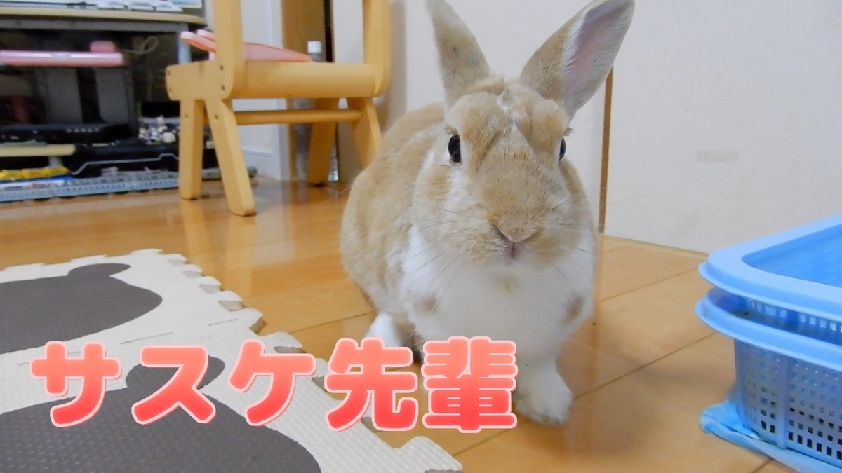 f:id:himitsunohana:20210914183620j:plain