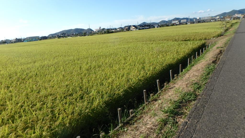f:id:himiyoshi:20180928154928j:plain