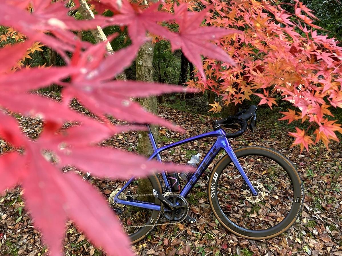 f:id:himiyoshi:20201115102349j:plain