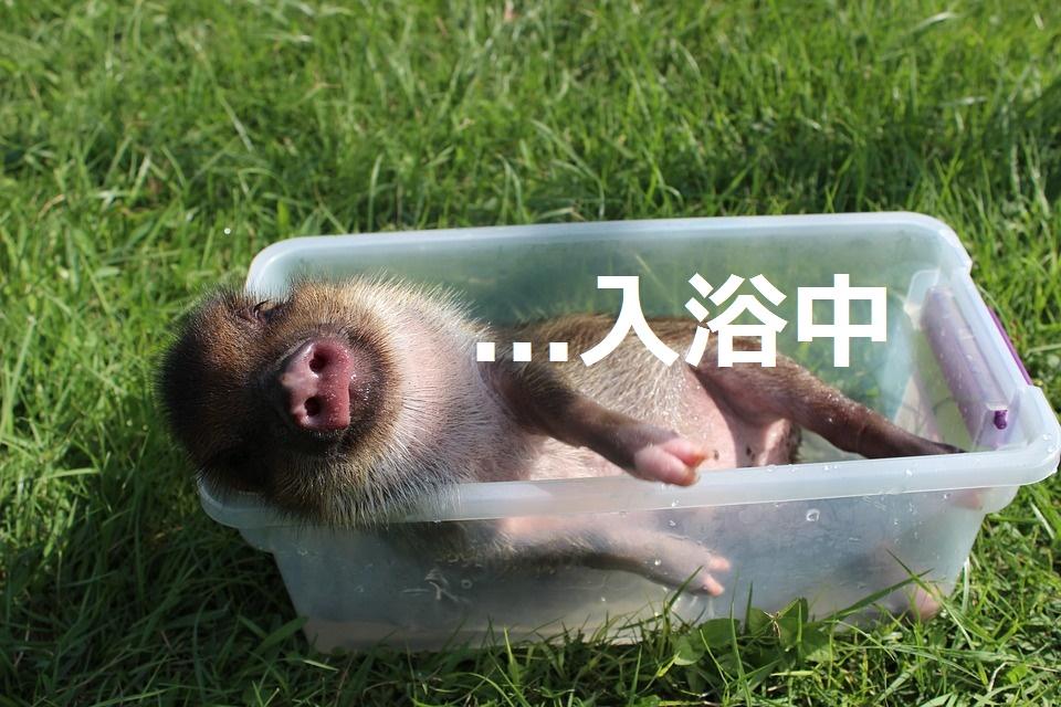 f:id:hinaaoyumi:20161218133119j:plain