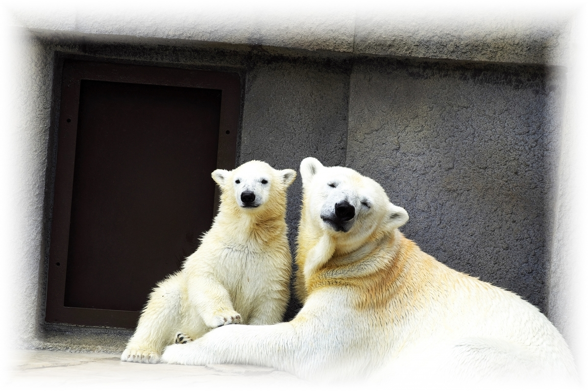 札幌市 動物園 円山動物園