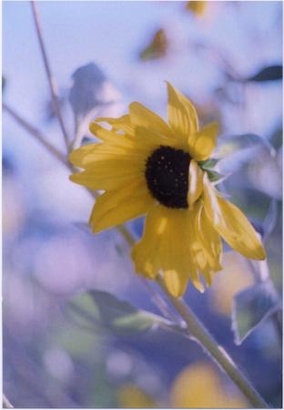 f:id:hinatadiary:20071116005208j:image