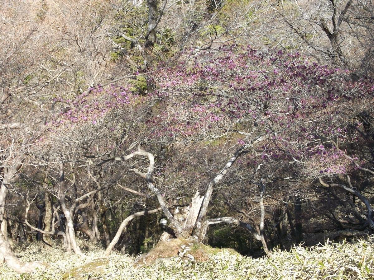 f:id:hinemosu_yamajii:20160501090042j:plain