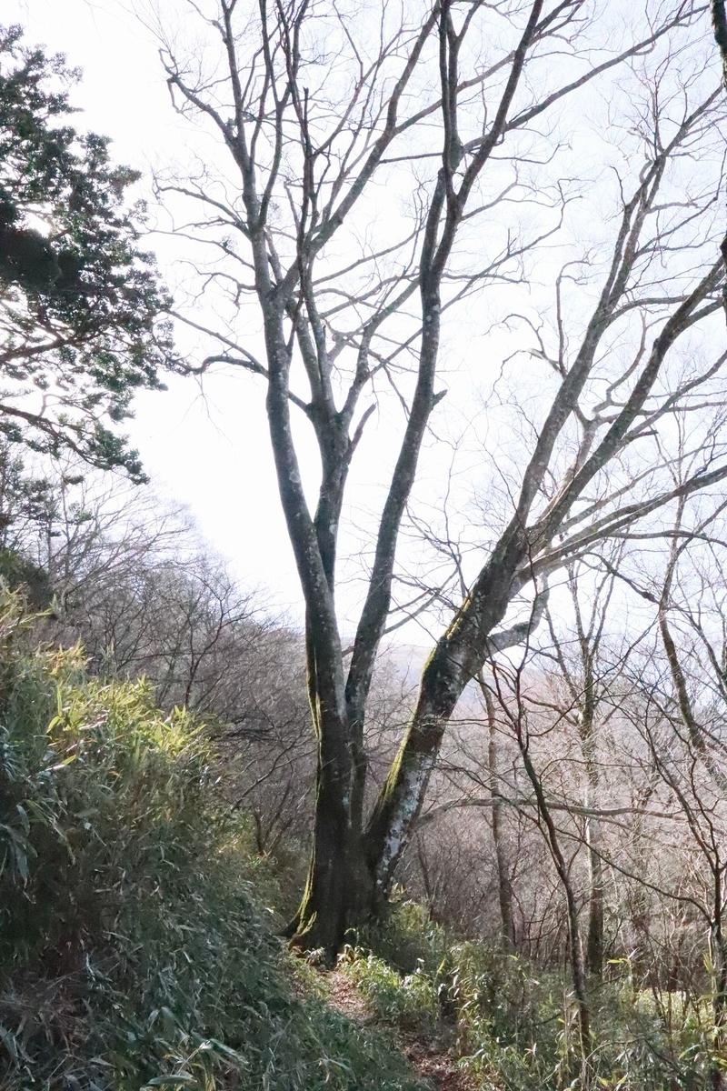 f:id:hinemosu_yamajii:20200401142952j:plain
