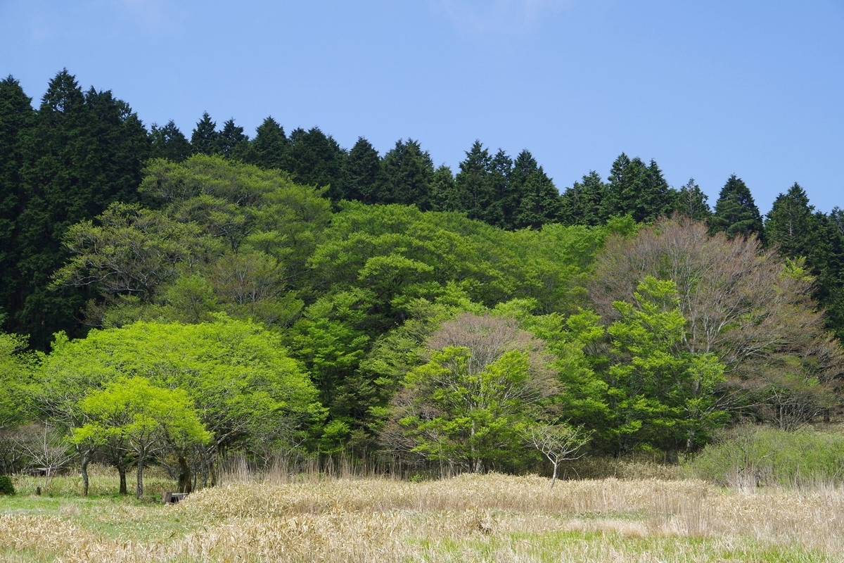 f:id:hinemosu_yamajii:20210417104501j:plain