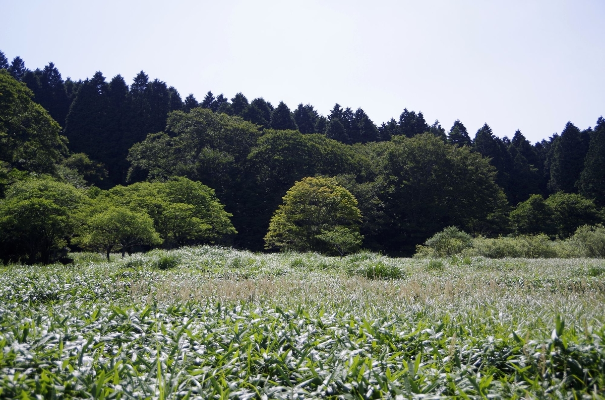f:id:hinemosu_yamajii:20210417113649j:plain