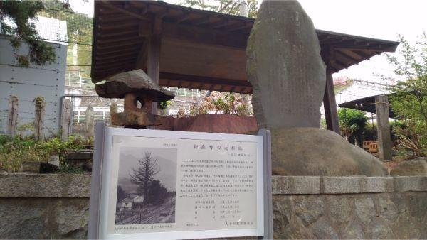 初鹿野諏訪神社の杉
