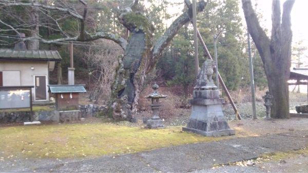 穂見諏訪十五所神社のケヤキ
