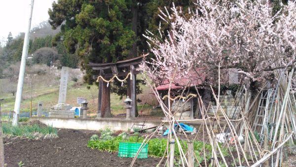 葛山落合神社の鳥居