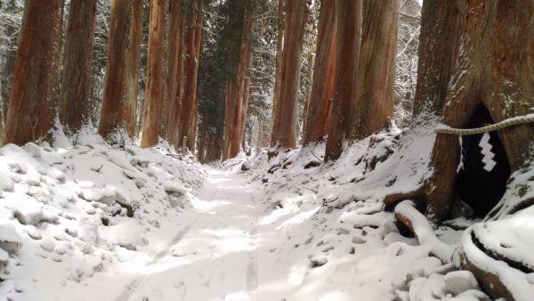 奥社杉並木
