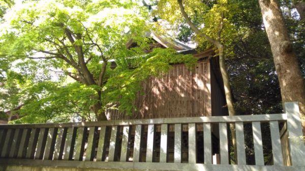 天津神社本殿側面