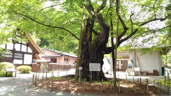 雲峰寺の桜と宝物殿