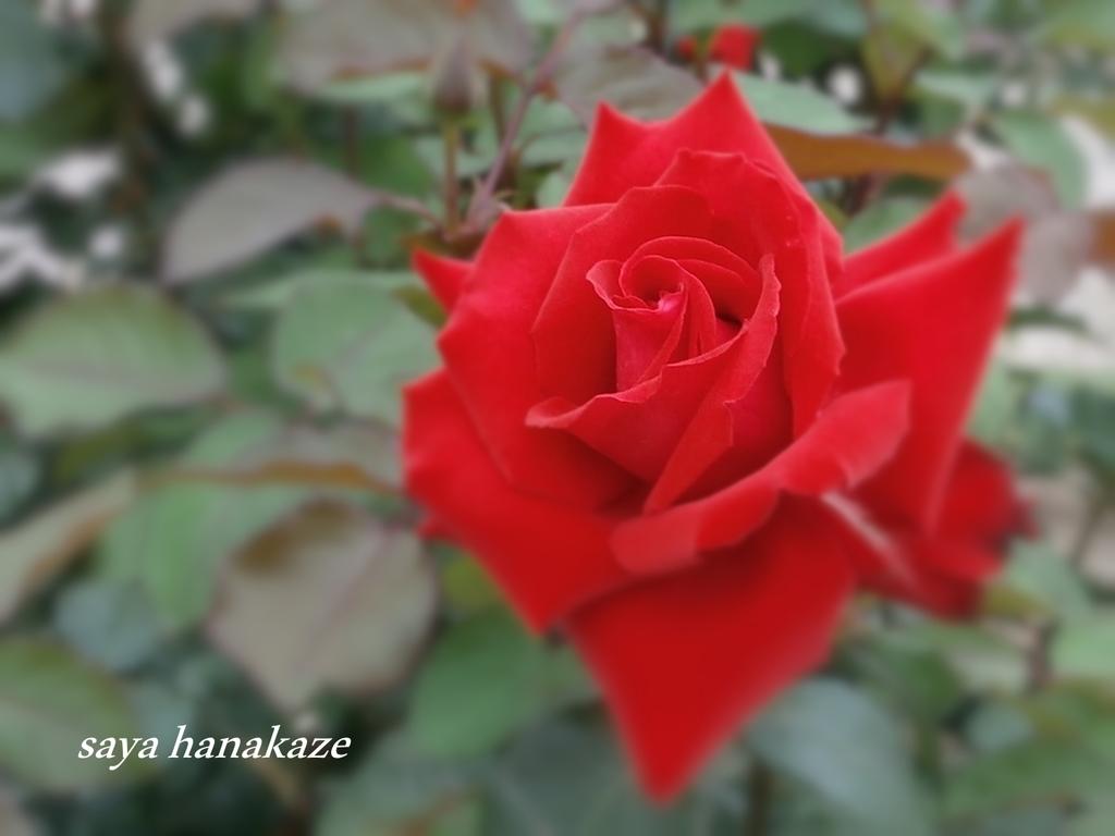 f:id:hinoatarusakamiti:20180905164129j:plain