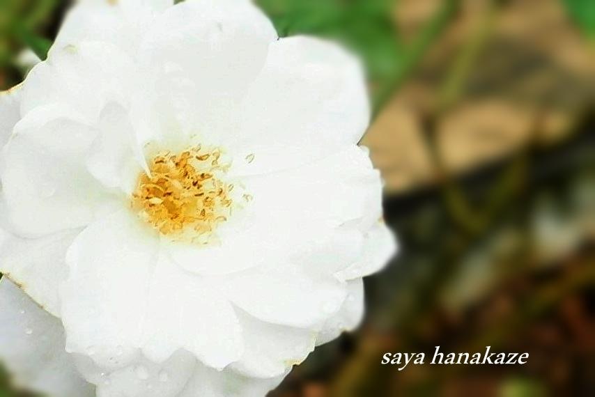 f:id:hinoatarusakamiti:20181008012855j:plain