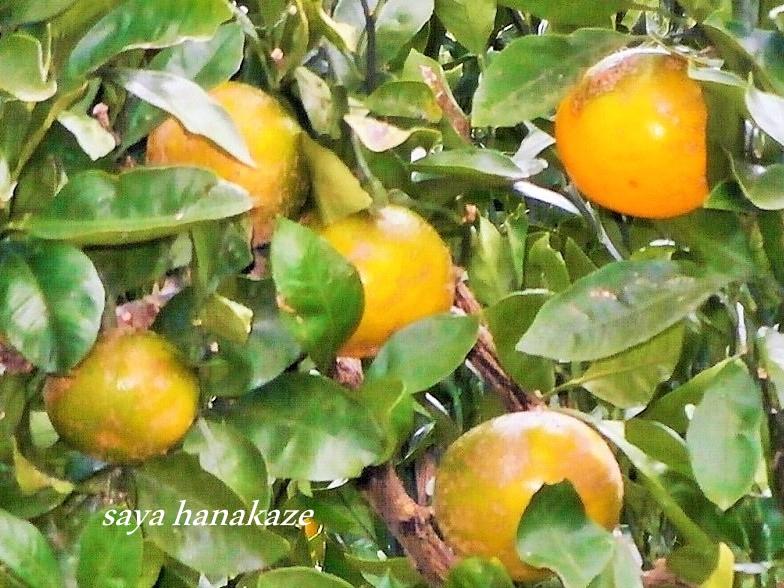 f:id:hinoatarusakamiti:20181017230703j:plain