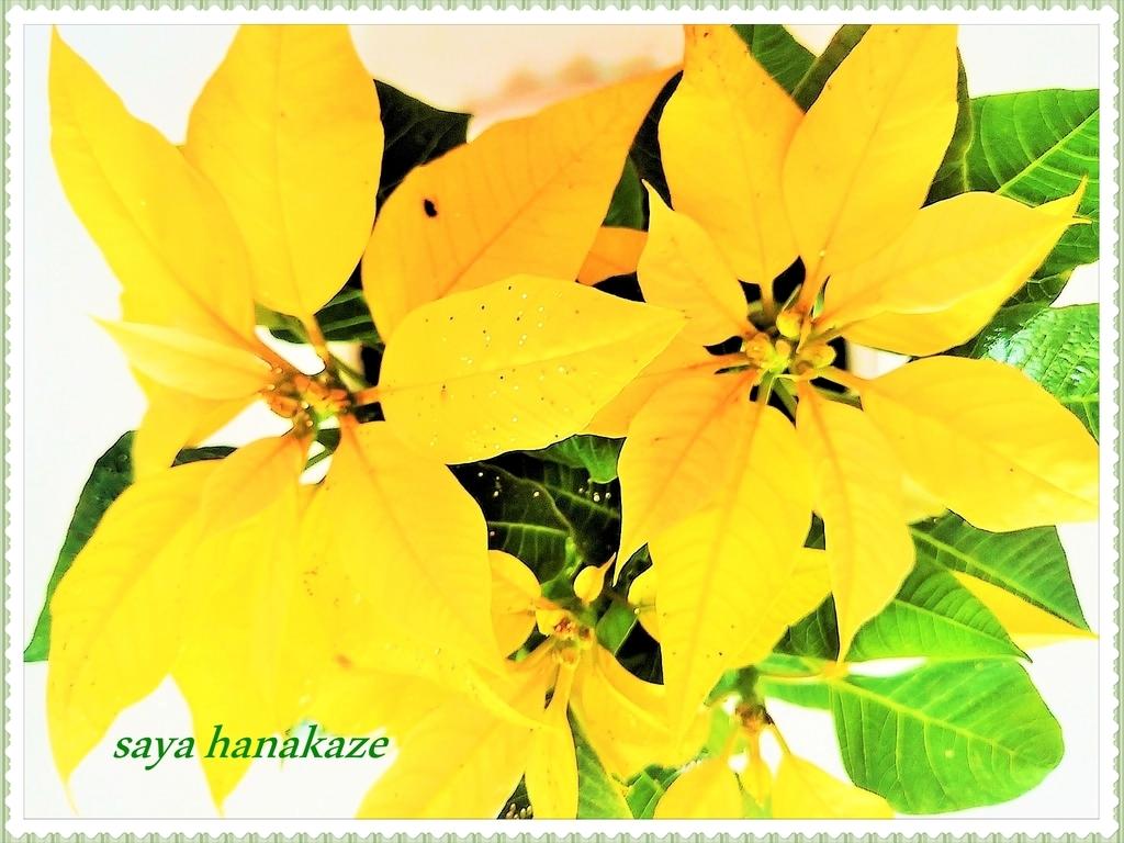 f:id:hinoatarusakamiti:20181205025818j:plain