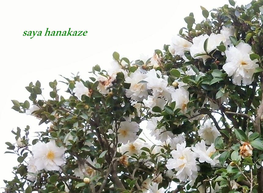 f:id:hinoatarusakamiti:20181205170318j:plain