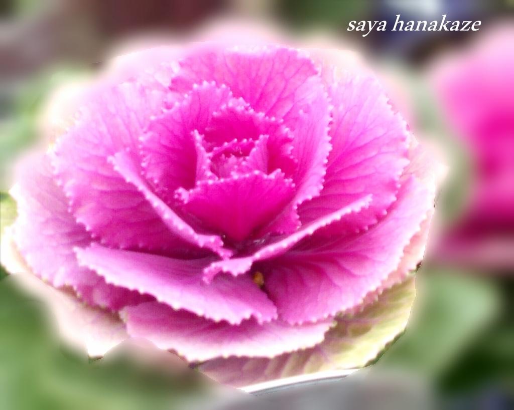f:id:hinoatarusakamiti:20181218215538j:plain