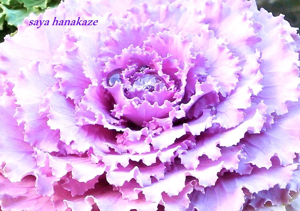 f:id:hinoatarusakamiti:20181218220027j:plain