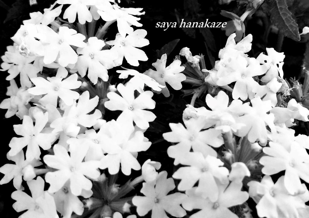 f:id:hinoatarusakamiti:20190227215348j:plain