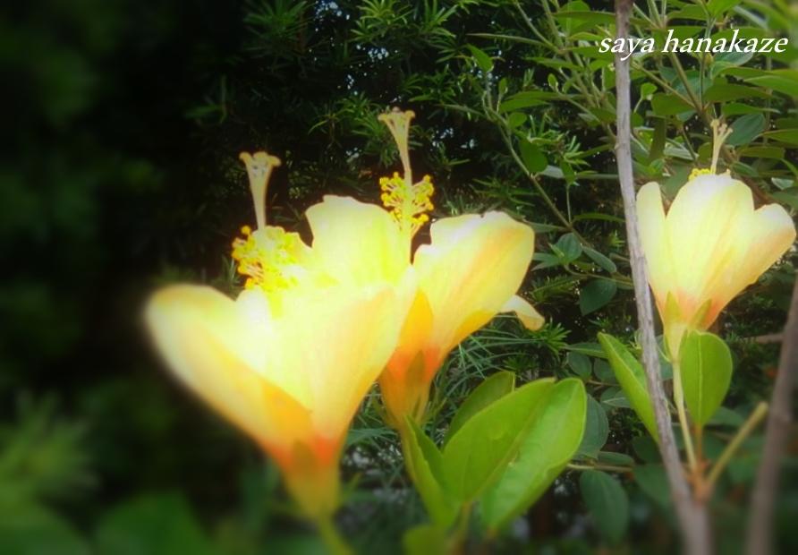 f:id:hinoatarusakamiti:20190822233836j:plain