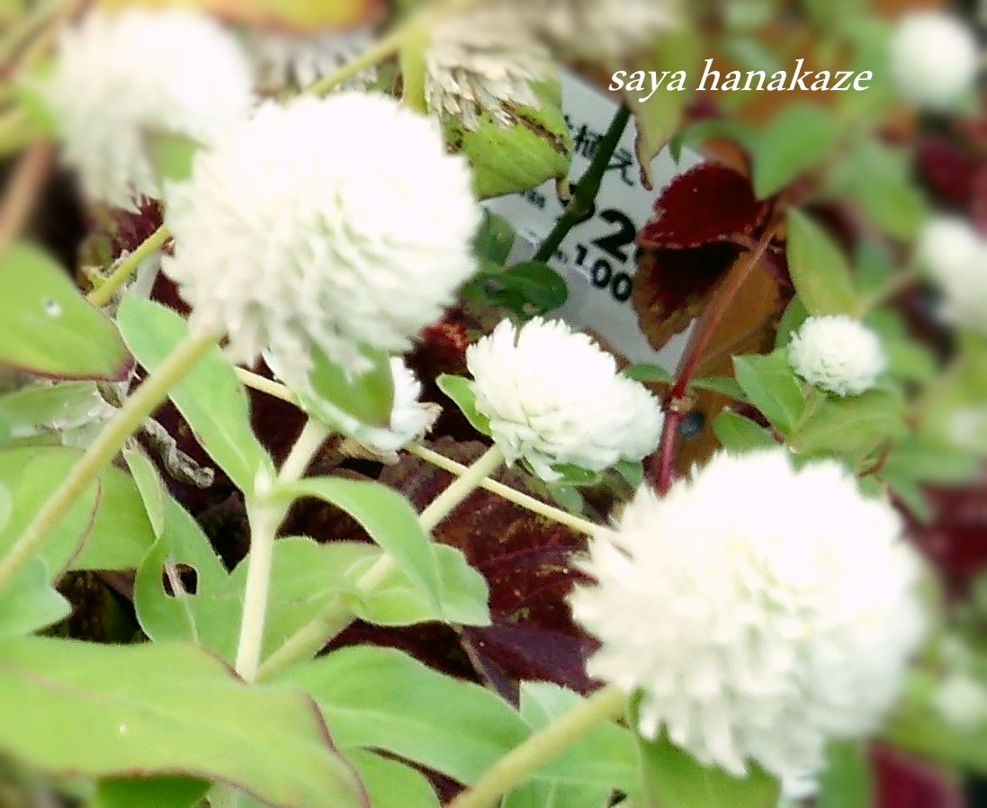 f:id:hinoatarusakamiti:20190908222656j:plain