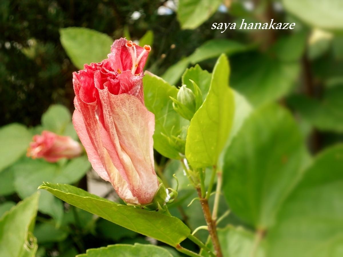 f:id:hinoatarusakamiti:20190917025949j:plain