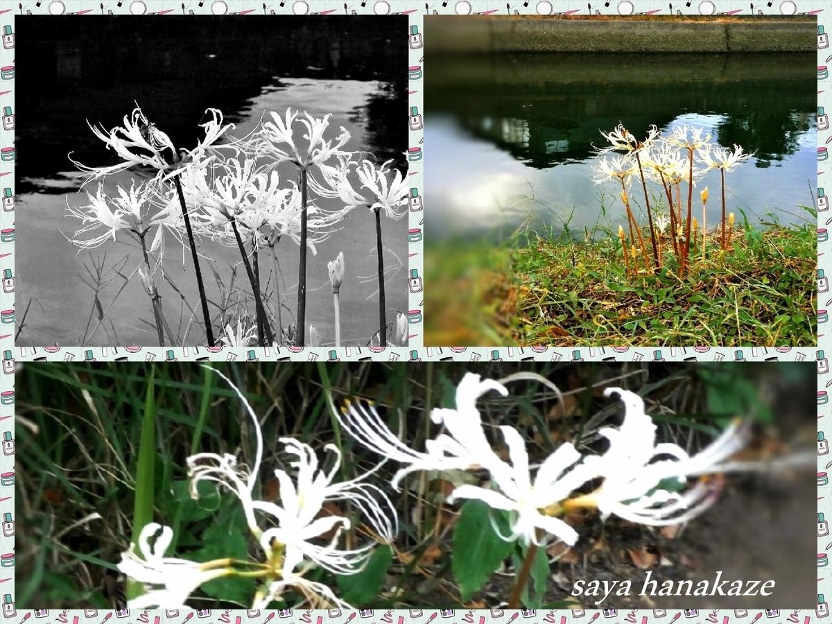f:id:hinoatarusakamiti:20190922233105j:plain