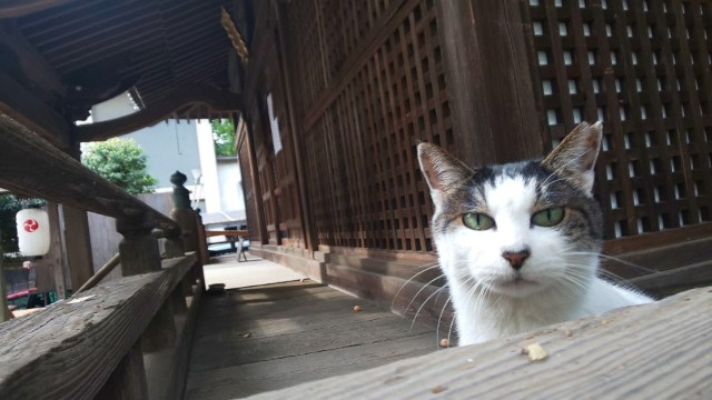 f:id:hinoki_kaonashi:20201115182557j:plain