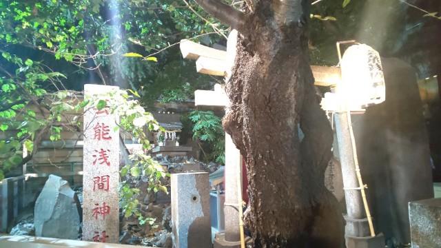 f:id:hinoki_kaonashi:20201123162548j:plain