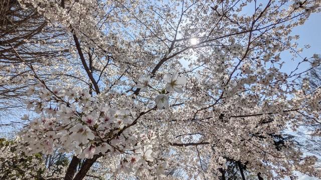 f:id:hinoki_kaonashi:20210331121015j:plain
