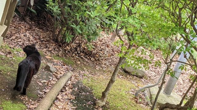 f:id:hinoki_kaonashi:20210414164219j:plain