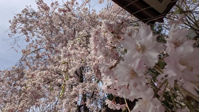 f:id:hinoki_kaonashi:20210417154515j:plain