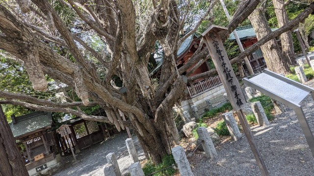 f:id:hinoki_kaonashi:20210506144517j:plain