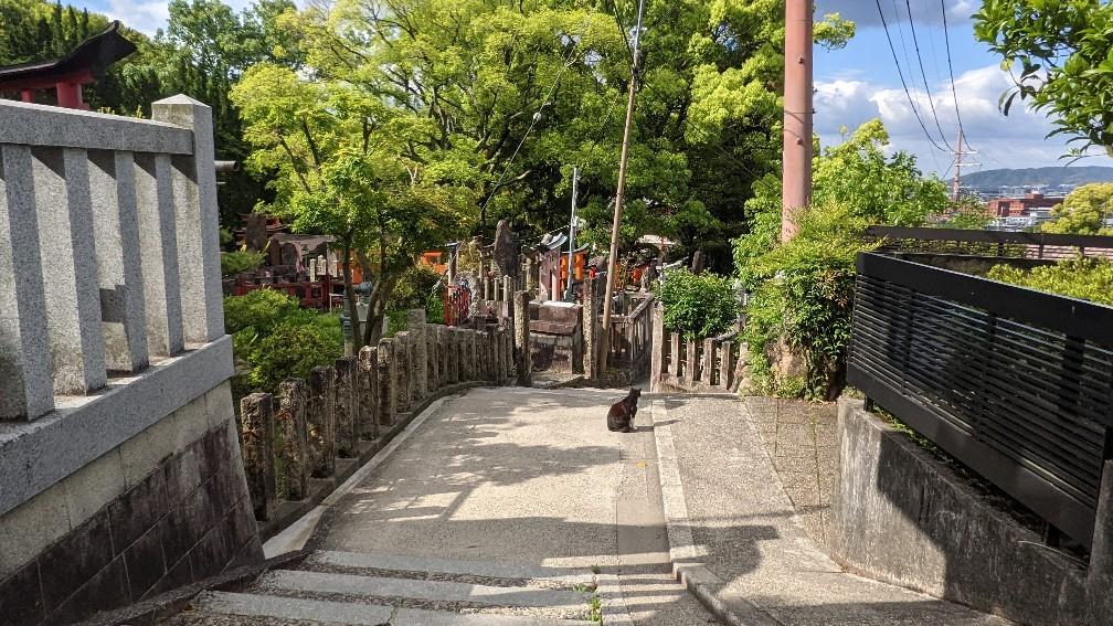 f:id:hinoki_kaonashi:20210602172035j:plain