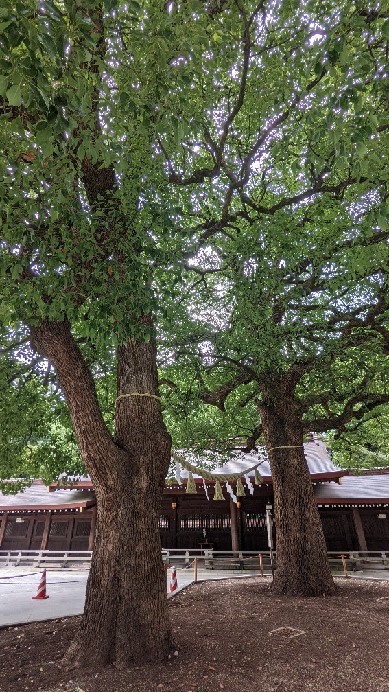 f:id:hinoki_kaonashi:20210907165744j:plain