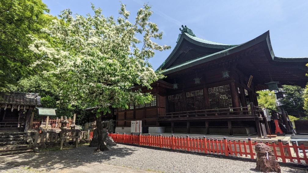 f:id:hinoki_kaonashi:20210928192201j:plain