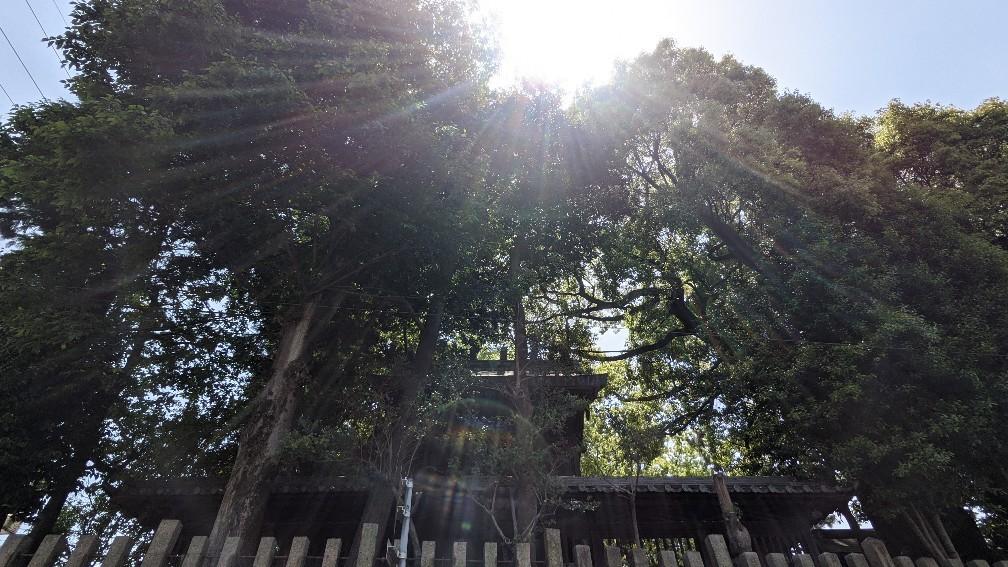 f:id:hinoki_kaonashi:20211003181648j:plain