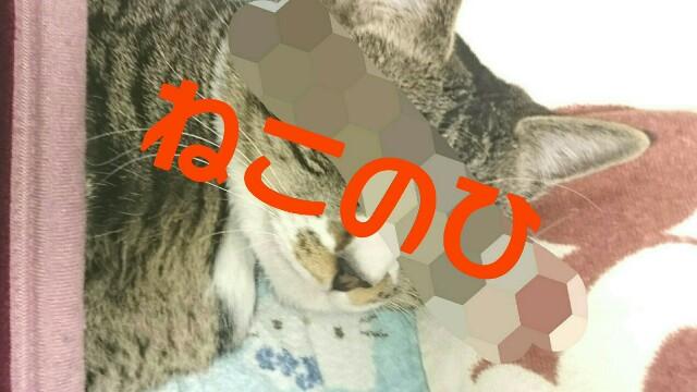 f:id:hioari96:20180218184626j:image