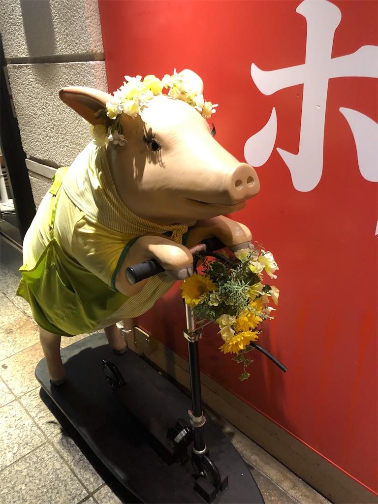 f:id:hippopotamuse-attack:20190625235908j:image